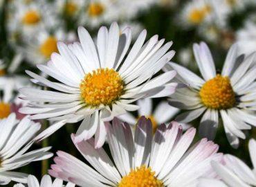 Ibraflor pede ajuda para garantir funcionamento de floriculturas